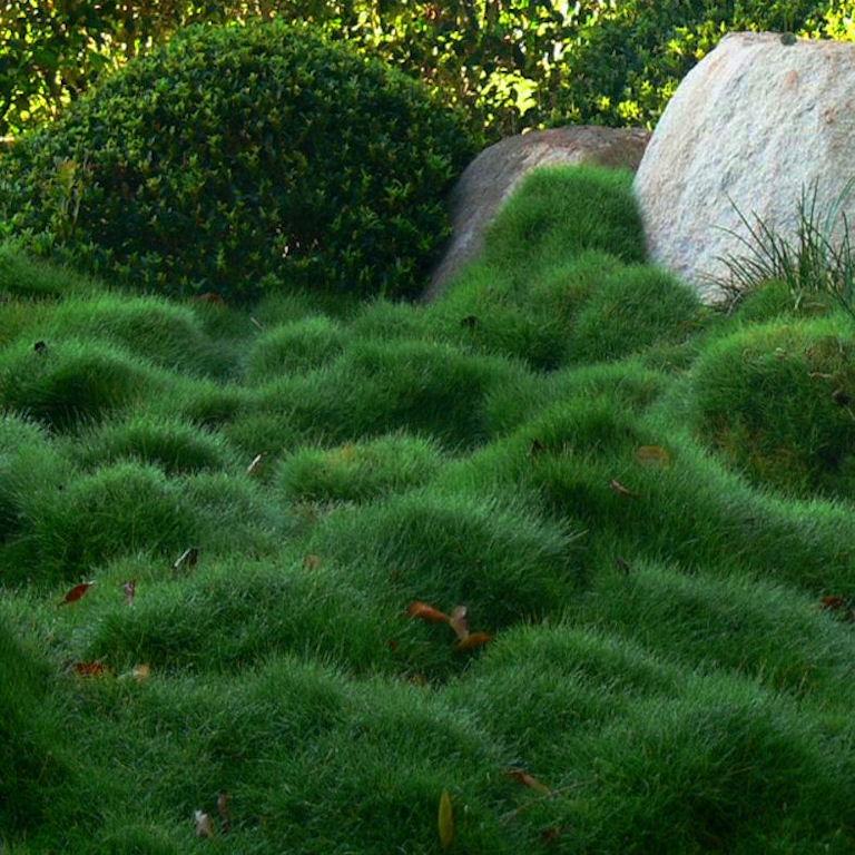 การจัดสวนใช้หญ้านวลจันทร์