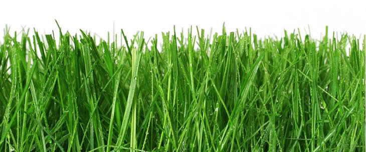 for Short grasses for landscaping